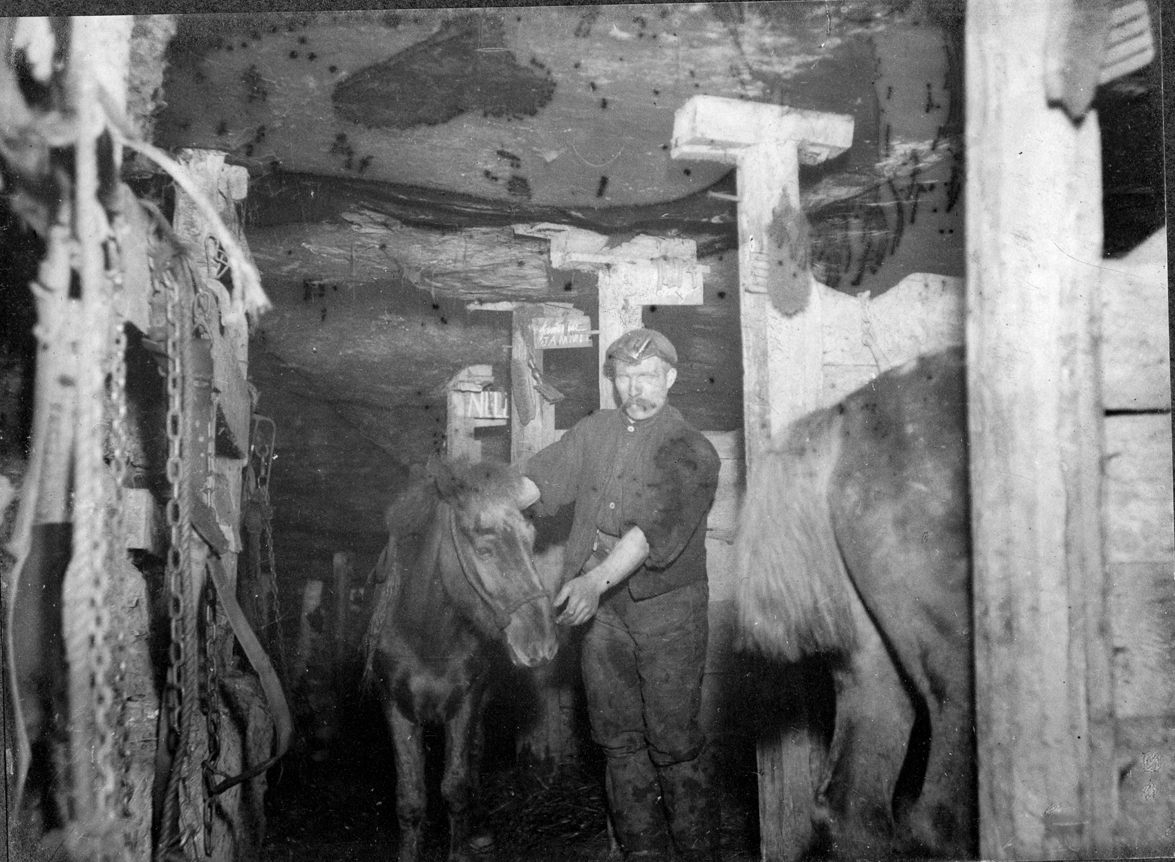 Underground stables for pit ponies at Camp Colliery in around 1910. You can see signs with the ponies' names on the stalls.